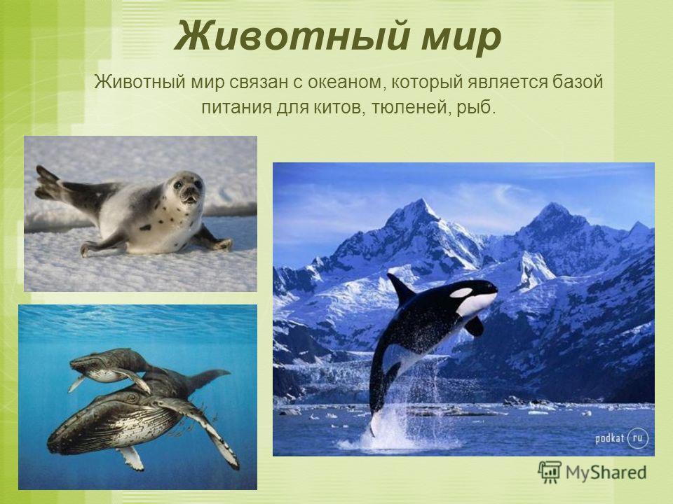 Животный мир Животный мир связан с океаном, который является базой питания для китов, тюленей, рыб.