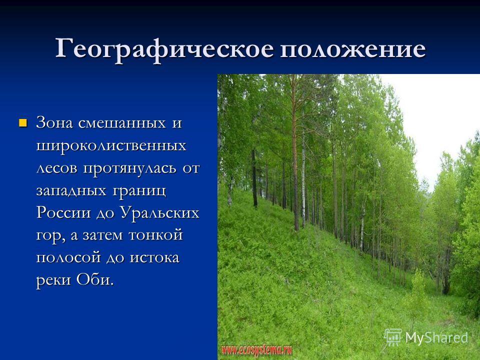 Географическое положение Зона смешанных и широколиственных лесов протянулась от западных границ России до Уральских гор, а затем тонкой полосой до истока реки Оби. Зона смешанных и широколиственных лесов протянулась от западных границ России до Ураль