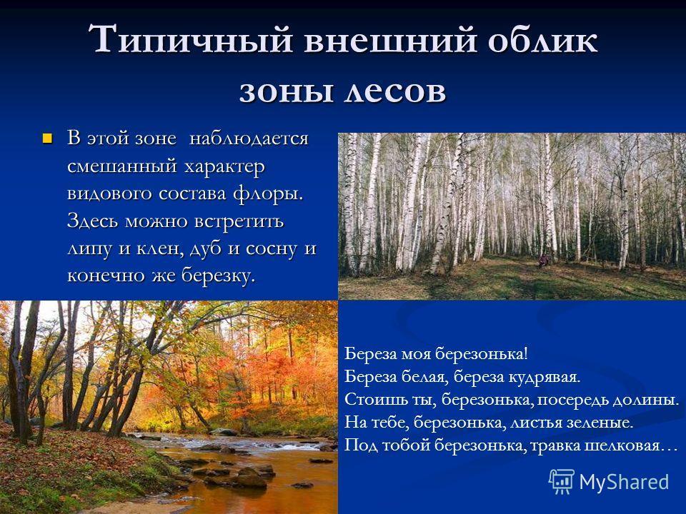 Типичный внешний облик зоны лесов В этой зоне наблюдается смешанный характер видового состава флоры. Здесь можно встретить липу и клен, дуб и сосну и конечно же березку. В этой зоне наблюдается смешанный характер видового состава флоры. Здесь можно в