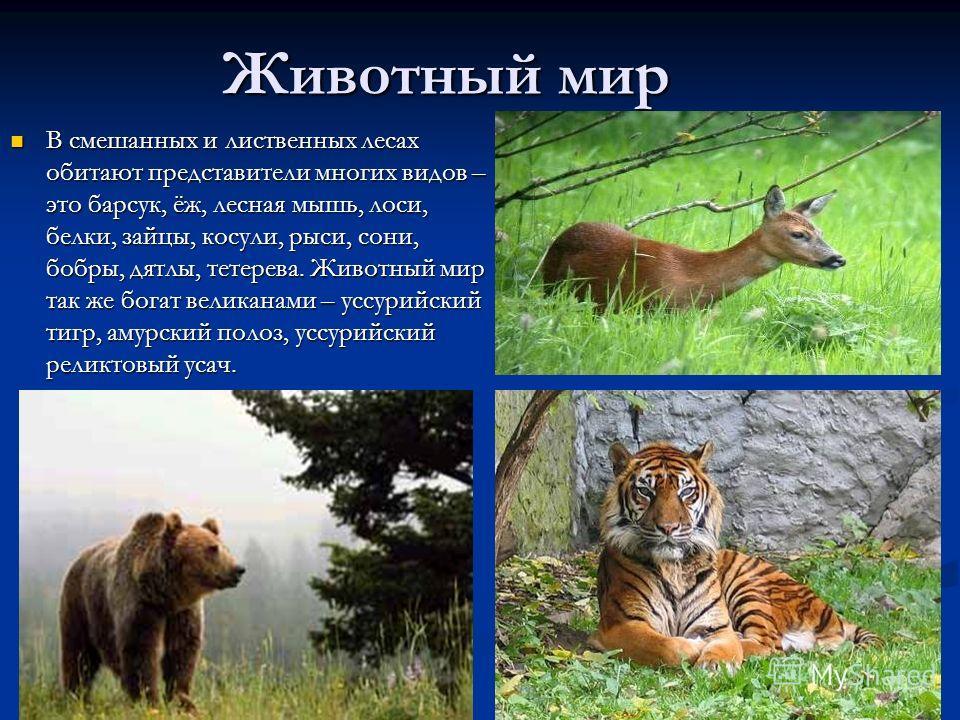 Зона лесов животные доклад 8572