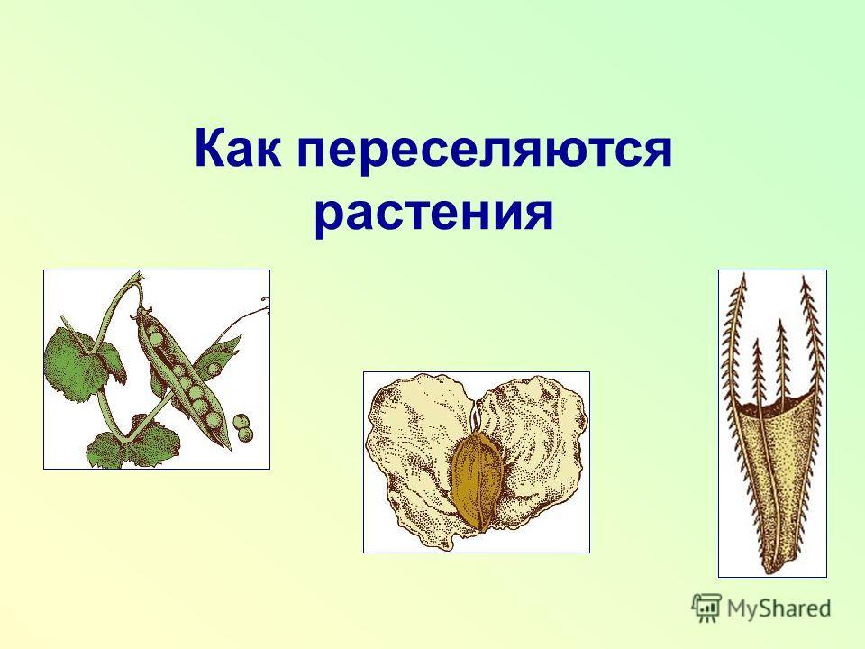 Как переселяются растения