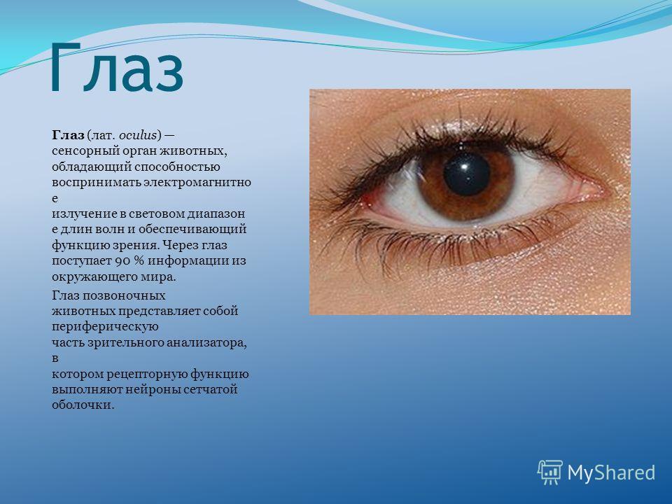 Глаз Глаз (лат. oculus) сенсорный орган животных, обладающий способностью воспринимать электромагнитно е излучение в световом диапазон е длин волн и обеспечивающий функцию зрения. Через глаз поступает 90 % информации из окружающего мира. Глаз позвоно