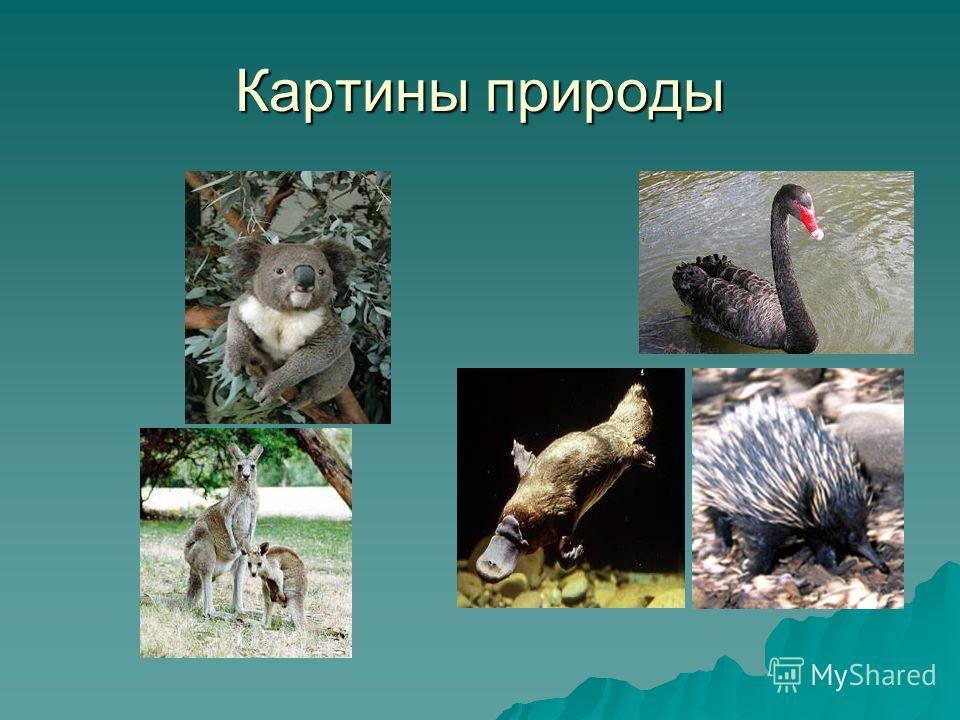 Картины природы