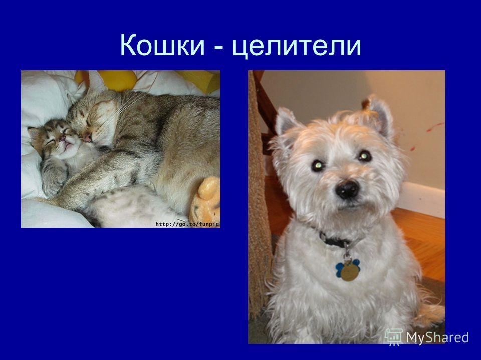 Кошки - целители