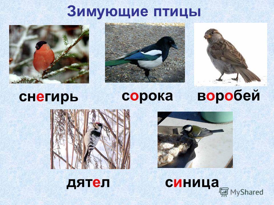снегирь сорокаворобей дятелсиница Зимующие птицы