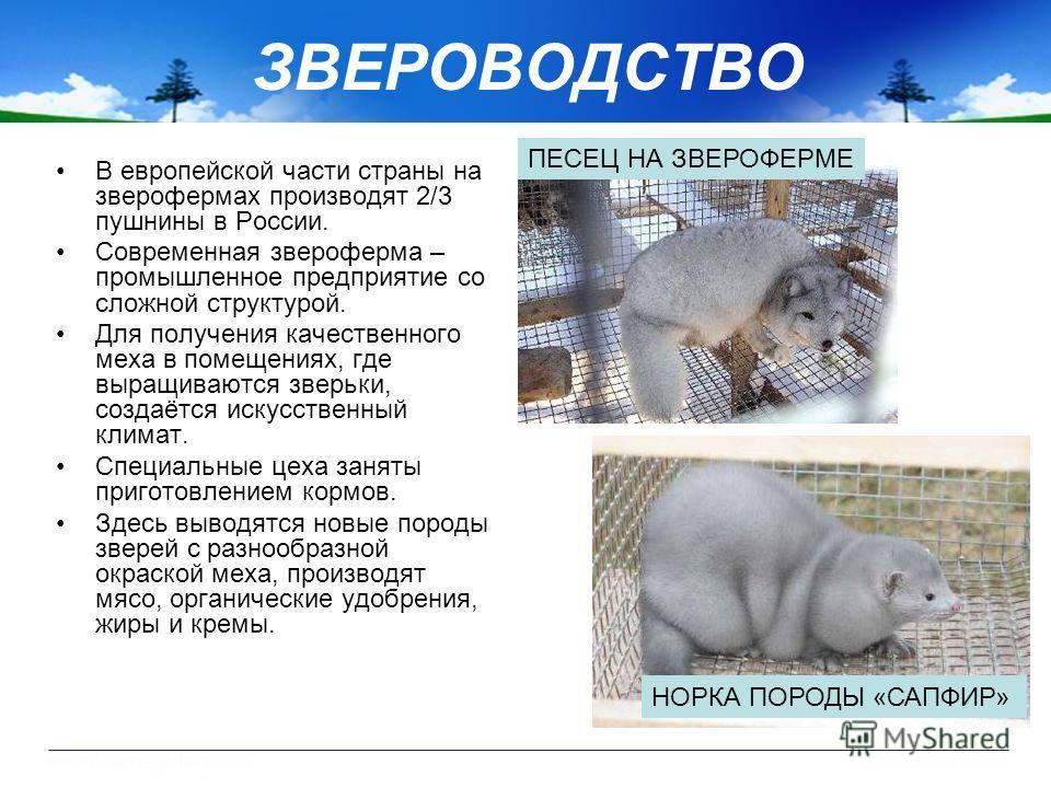 ЗВЕРОВОДСТВО В европейской части страны на зверофермах производят 2/3 пушнины в России. Современная звероферма – промышленное предприятие со сложной структурой. Для получения качественного меха в помещениях, где выращиваются зверьки, создаётся искусс