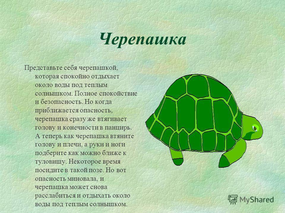 Черепашка Представьте себя черепашкой, которая спокойно отдыхает около воды под теплым солнышком. Полное спокойствие и безопасность. Но когда приближается опасность, черепашка сразу же втягивает голову и конечности в панцирь. А теперь как черепашка в