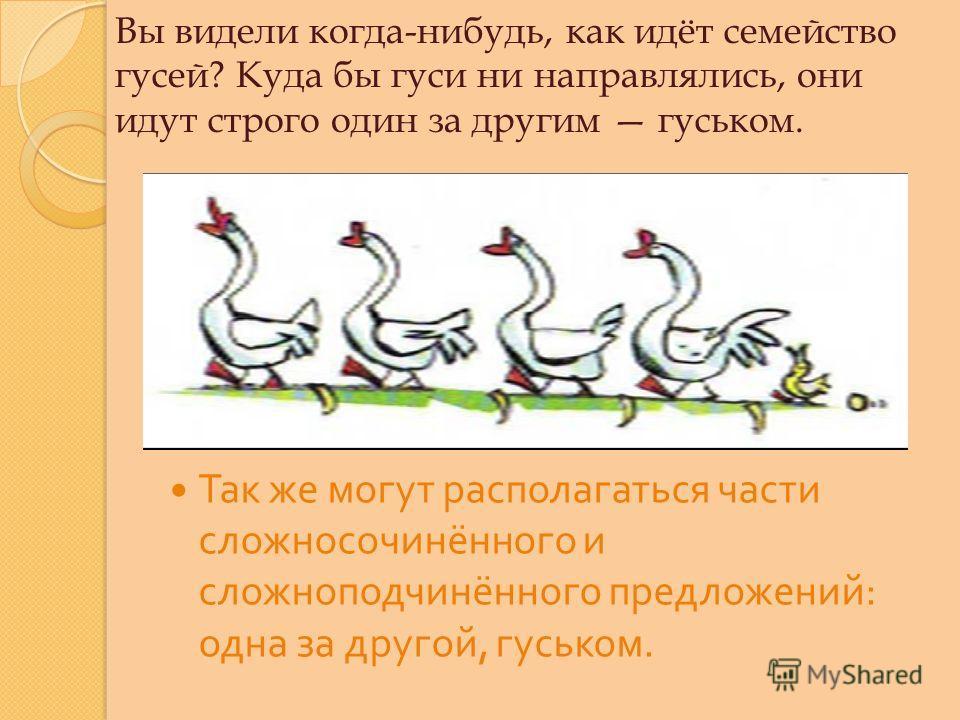 Вы видели когда-нибудь, как идёт семейство гусей? Куда бы гуси ни направлялись, они идут строго один за другим гуськом. Так же могут располагаться части сложносочинённого и сложноподчинённого предложений : одна за другой, гуськом.