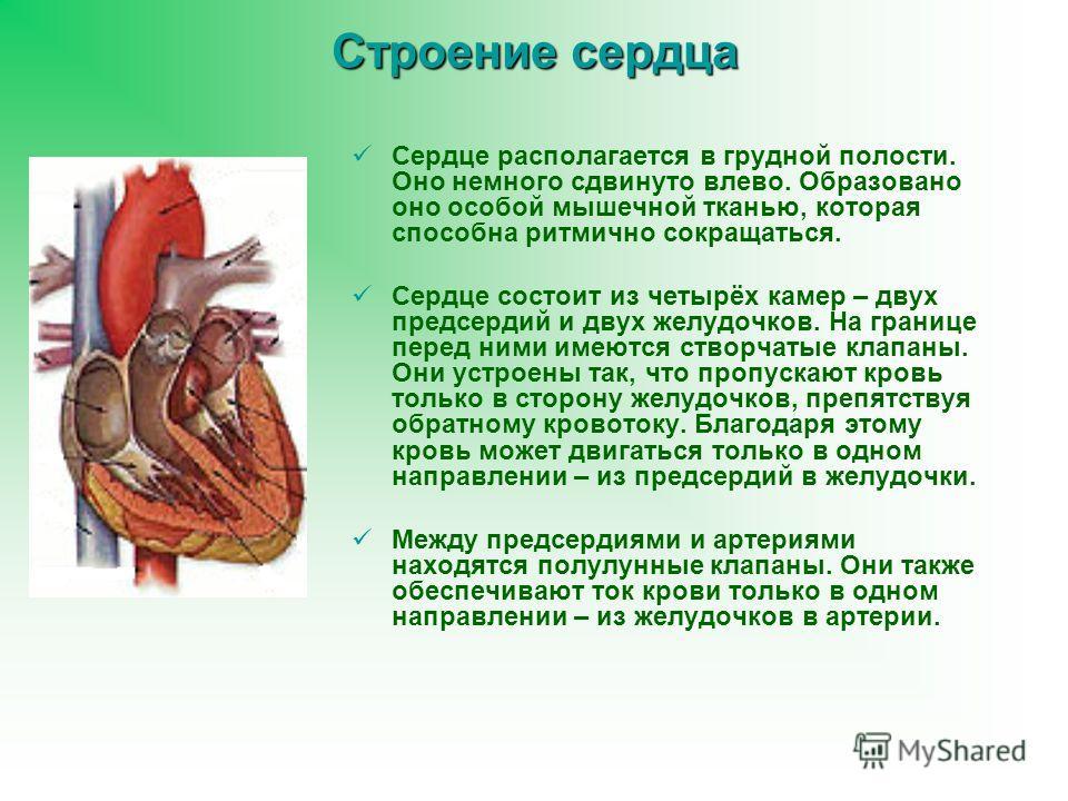 Строение сердца Сердце располагается в грудной полости. Оно немного сдвинуто влево. Образовано оно особой мышечной тканью, которая способна ритмично сокращаться. Сердце состоит из четырёх камер – двух предсердий и двух желудочков. На границе перед ни