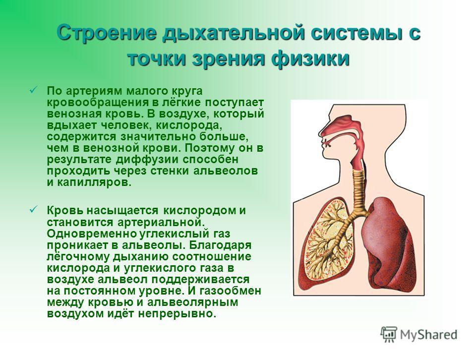 Строение дыхательной системы с точки зрения физики По артериям малого круга кровообращения в лёгкие поступает венозная кровь. В воздухе, который вдыхает человек, кислорода, содержится значительно больше, чем в венозной крови. Поэтому он в результате