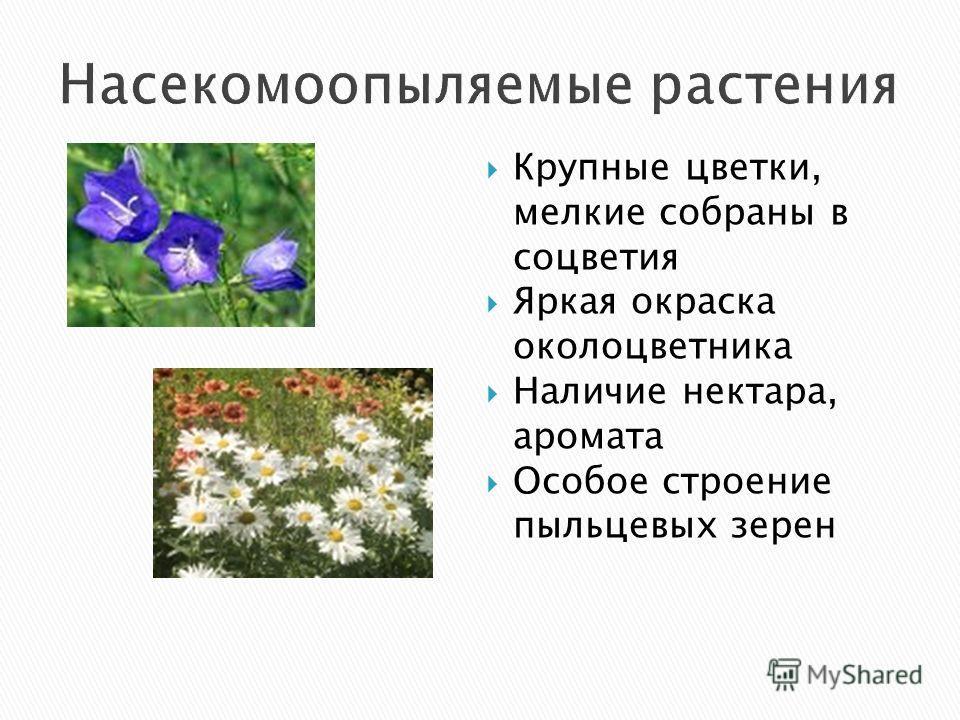 Крупные цветки, мелкие собраны в соцветия Яркая окраска околоцветника Наличие нектара, аромата Особое строение пыльцевых зерен