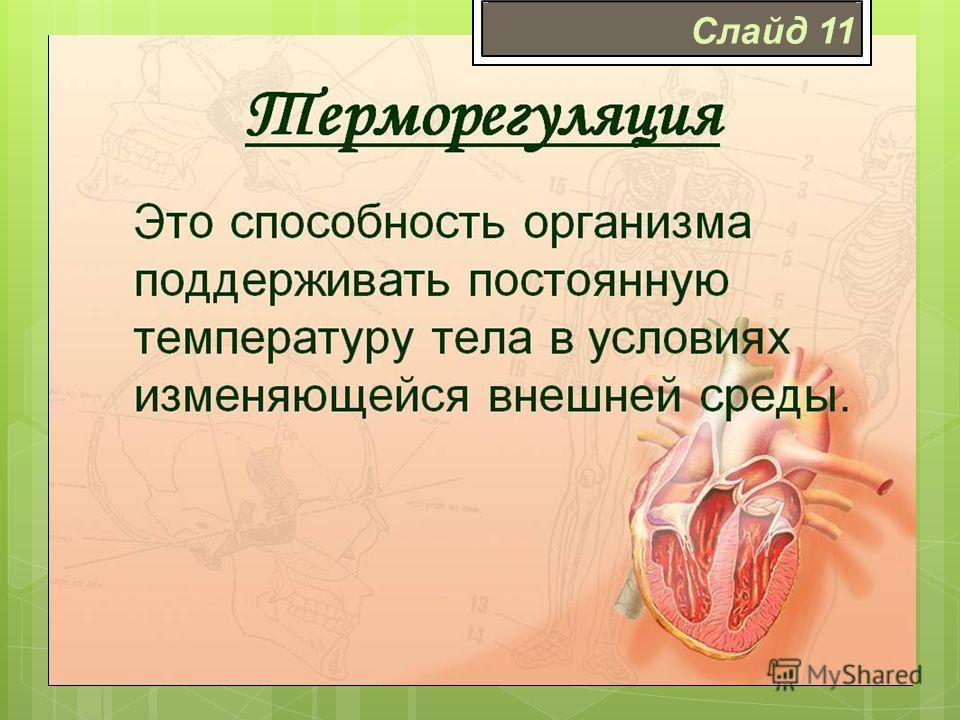 Терморегуляция Терморегуляция – совокупность физиологических и химических процессов в организме человека, направленных на поддержание постоянства температуры тела. Слайд 11