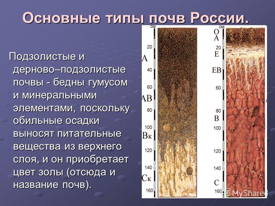 Основные типы почв России. Подзолистые и дерново–подзолистые почвы - бедны гумусом и минеральными элементами, поскольку обильные осадки выносят питательные вещества из верхнего слоя, и он приобретает цвет золы (отсюда и название почв). Подзолистые и