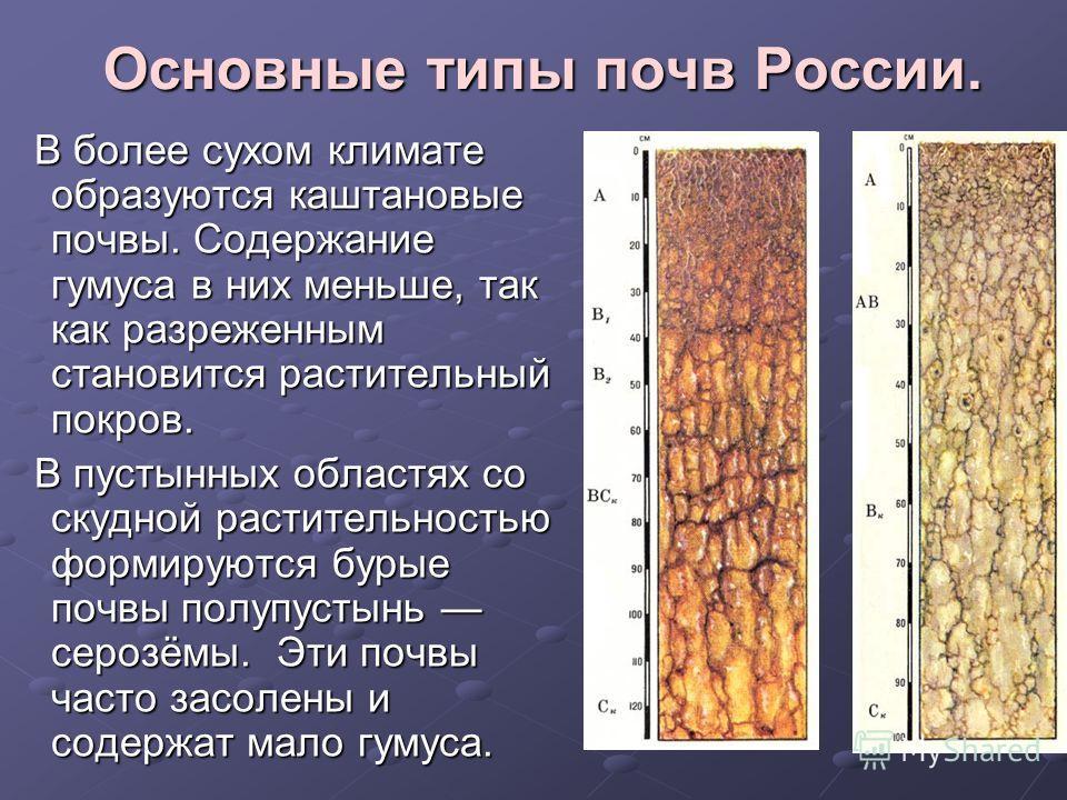 Основные типы почв России. В более сухом климате образуются каштановые почвы. Содержание гумуса в них меньше, так как разреженным становится растительный покров. В более сухом климате образуются каштановые почвы. Содержание гумуса в них меньше, так к