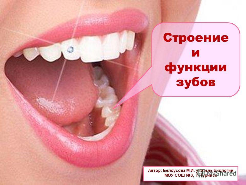 Строение и функции зубов Автор: Белоусова М.И. учитель биологии МОУ СОШ 3, г. Туринск