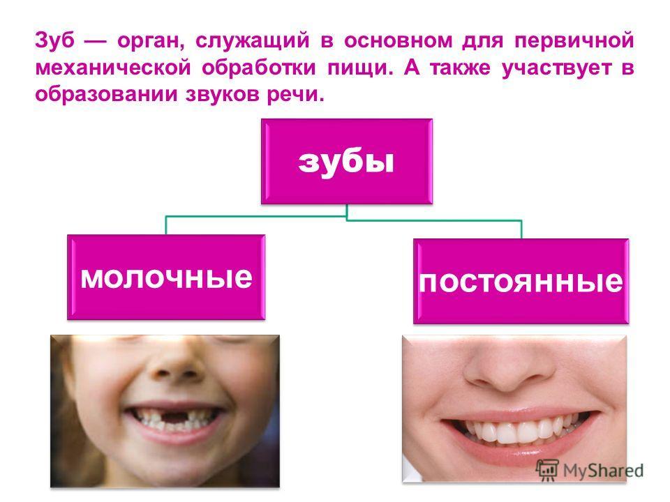 Зуб орган, служащий в основном для первичной механической обработки пищи. А также участвует в образовании звуков речи. зубы молочные постоянные