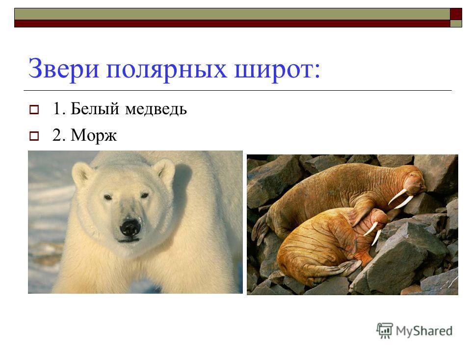 Звери жарких стран: 1. Слон 2. Жираф 3. Обезьяна