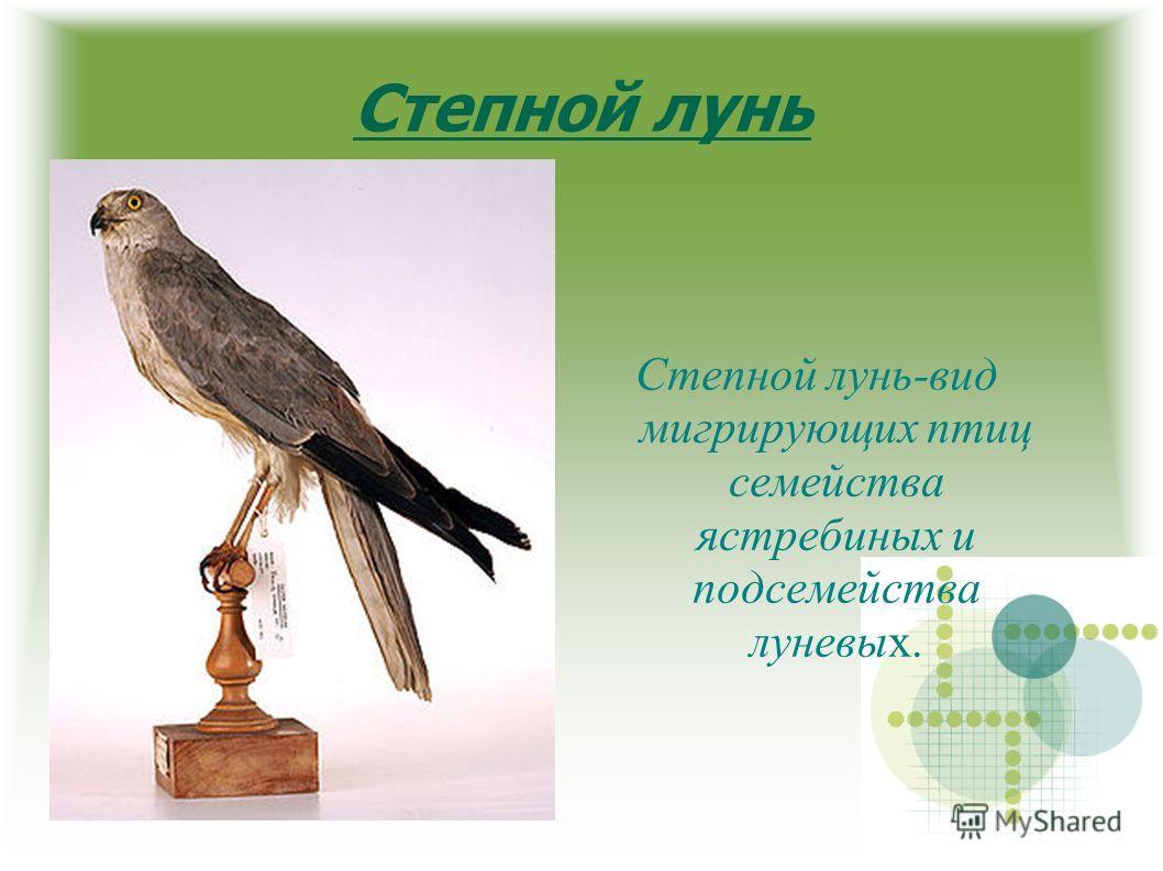 Степной лунь Степной лунь-вид мигрирующих птиц семейства ястребиных и подсемейства луневых.