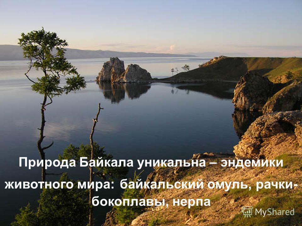Байкальская Нерпа Презентация