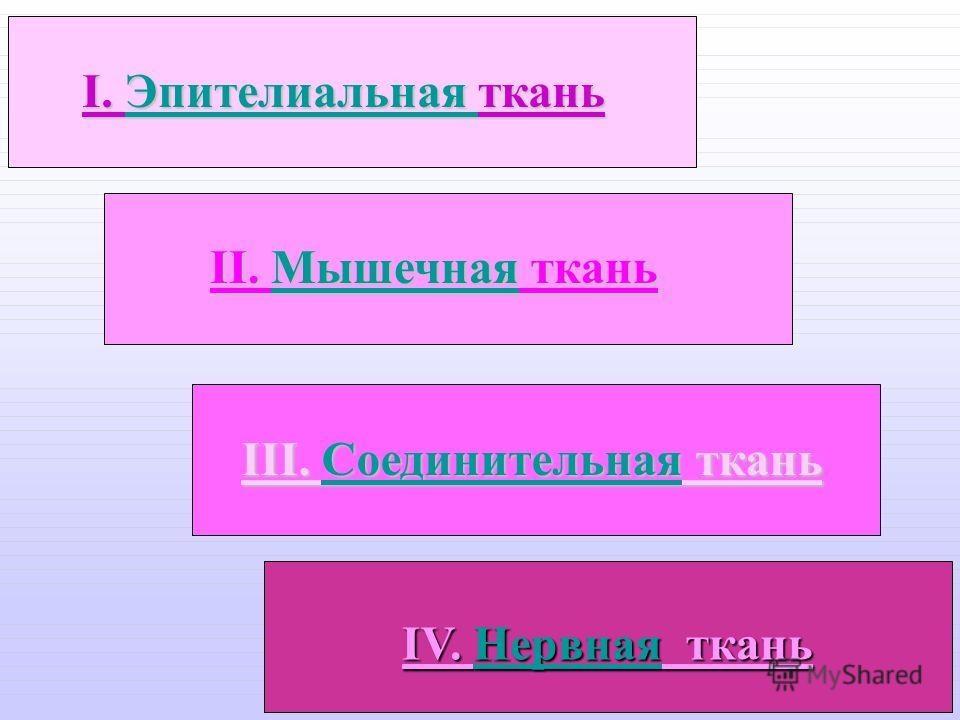 IV. Нервная ткань IV. Нервная ткань I. Эпителиальная ткань Эпителиальная II. Мышечная ткань Мышечная III. Соединительная ткань СоединительнаяСоединительная
