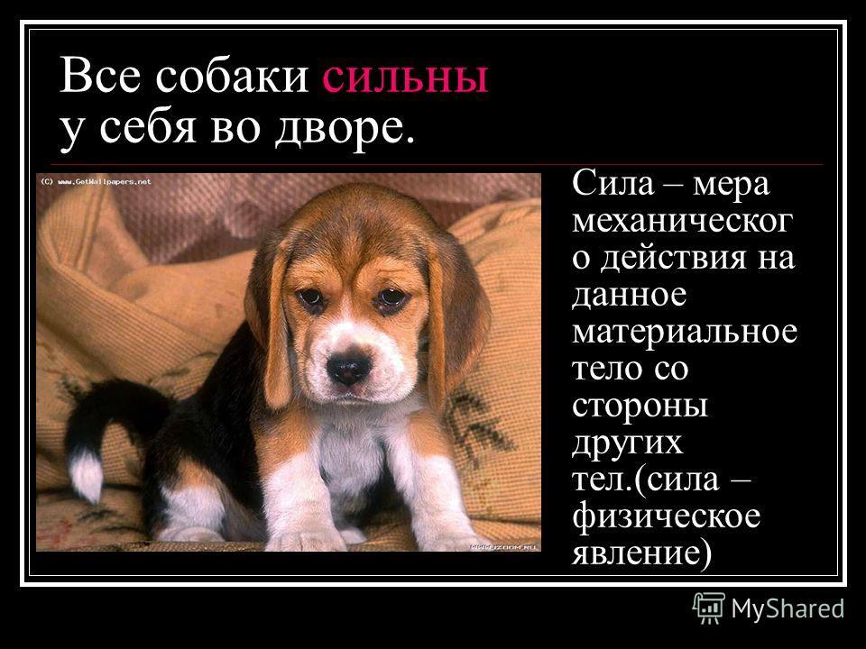 Все собаки сильны у себя во дворе. Сила – мера механическог о действия на данное материальное тело со стороны других тел.(сила – физическое явление)