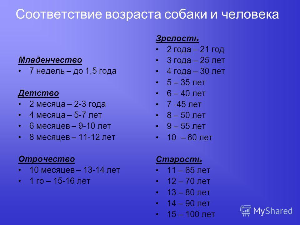 Соответствие возраста собаки и человека Младенчество 7 недель – до 1,5 года Детство 2 месяца – 2-3 года 4 месяца – 5-7 лет 6 месяцев – 9-10 лет 8 месяцев – 11-12 лет Отрочество 10 месяцев – 13-14 лет 1 го – 15-16 лет Зрелость 2 года – 21 год 3 года –