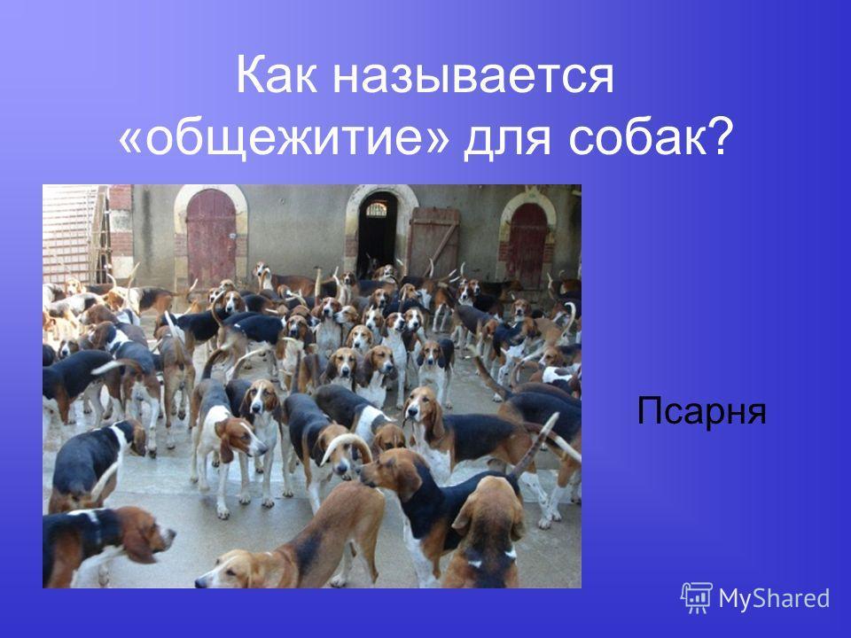 Как называется «общежитие» для собак? Псарня