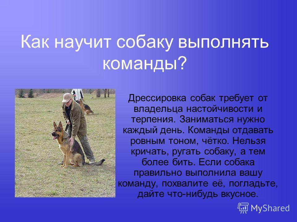 Как научит собаку выполнять команды? Дрессировка собак требует от владельца настойчивости и терпения. Заниматься нужно каждый день. Команды отдавать ровным тоном, чётко. Нельзя кричать, ругать собаку, а тем более бить. Если собака правильно выполнила