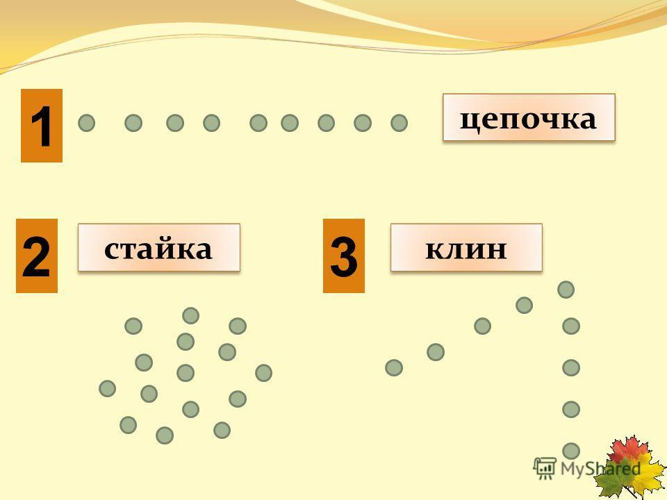 цепочкастайкаклин 1 23