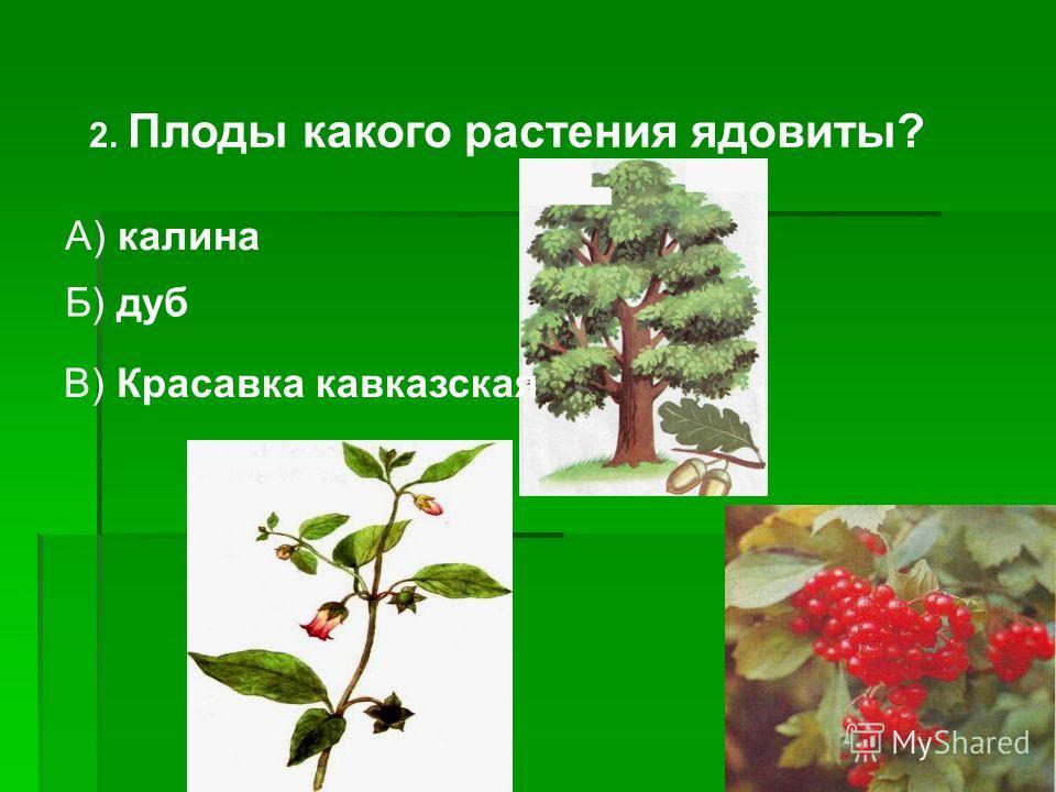 1. Что такое лес? Б) обширная местность, занятая травами, кустарниками, деревьями. А) обширная местность, занятая только травами.