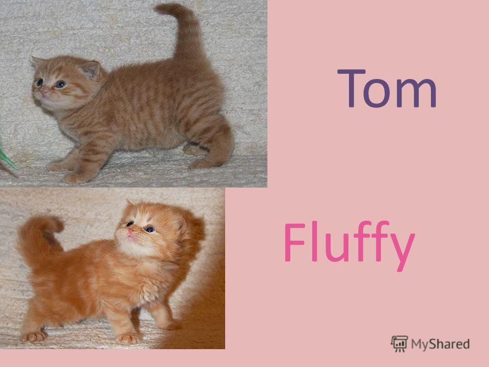 Tom Fluffy