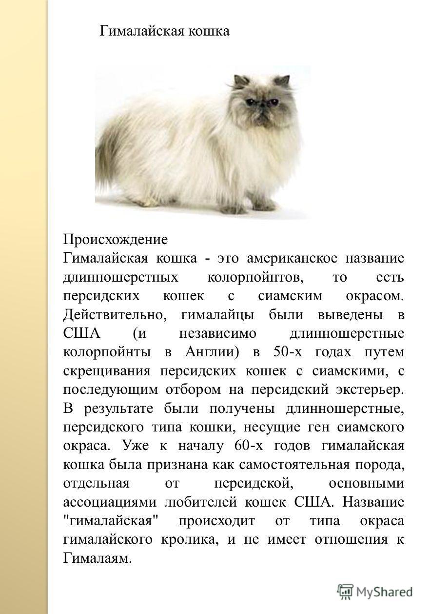 Гималайская кошка Происхождение Гималайская кошка - это американское название длинношерстных колорпойнтов, то есть персидских кошек с сиамским окрасом. Действительно, гималайцы были выведены в США (и независимо длинношерстные колорпойнты в Англии) в
