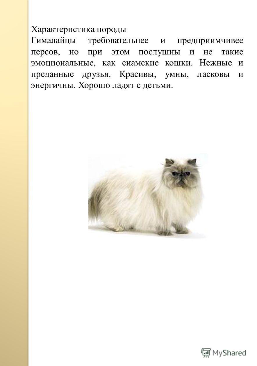 Характеристика породы Гималайцы требовательнее и предприимчивее персов, но при этом послушны и не такие эмоциональные, как сиамские кошки. Нежные и преданные друзья. Красивы, умны, ласковы и энергичны. Хорошо ладят с детьми.