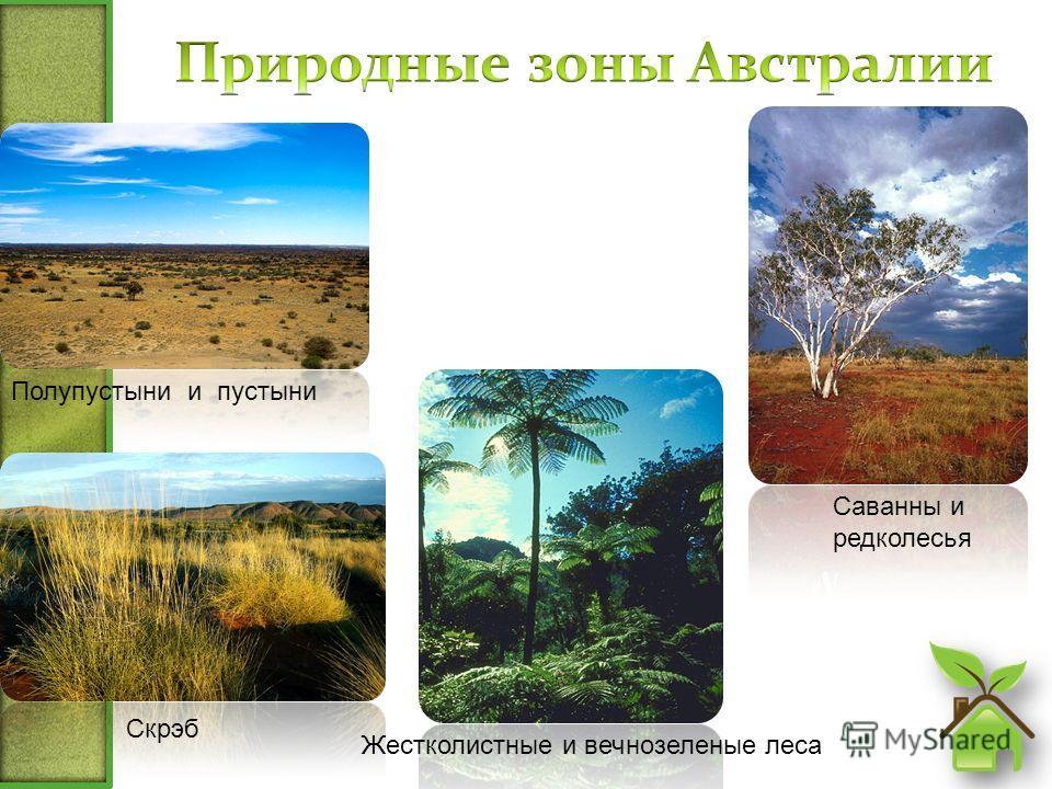 Скрэб Саванны и редколесья Жестколистные и вечнозеленые леса Полупустыни и пустыни