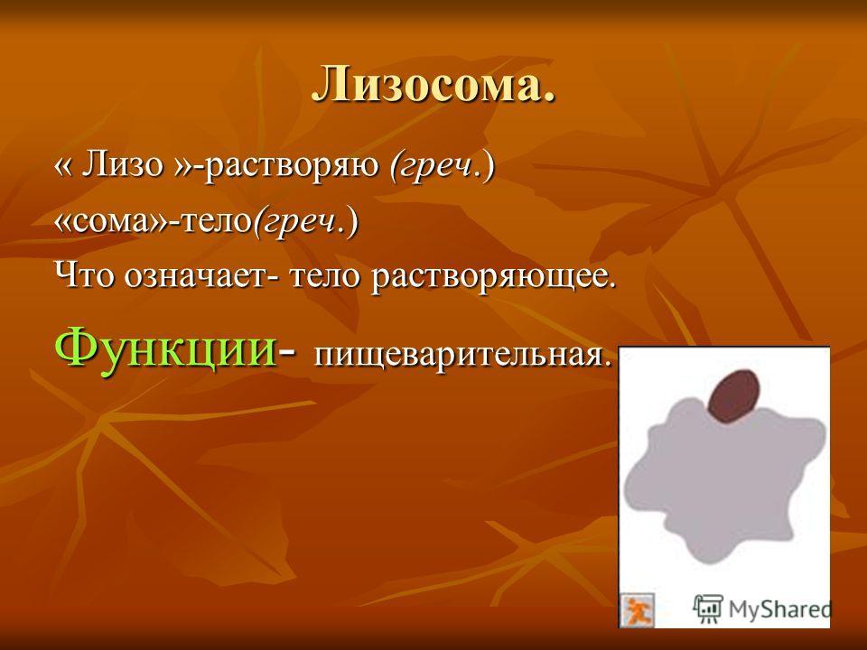 Лизосома. « Лизо »-растворяю (греч.) «сома»-тело(греч.) Что означает- тело растворяющее. Функции- пищеварительная.