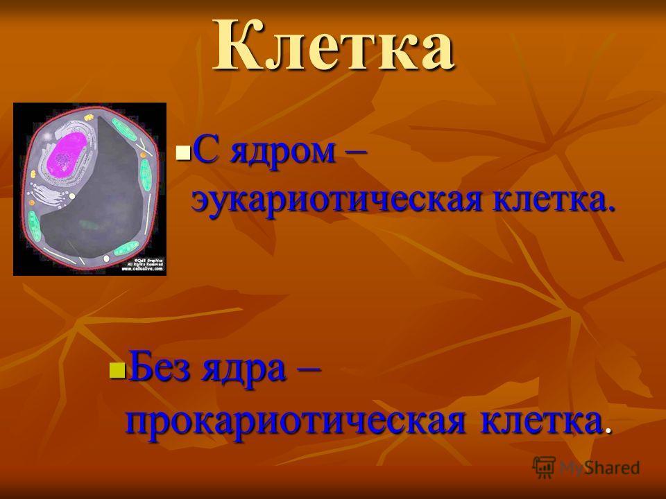 Клетка С ядром – эукариотическая клетка. С ядром – эукариотическая клетка. Без ядра – прокариотическая клетка. Без ядра – прокариотическая клетка.