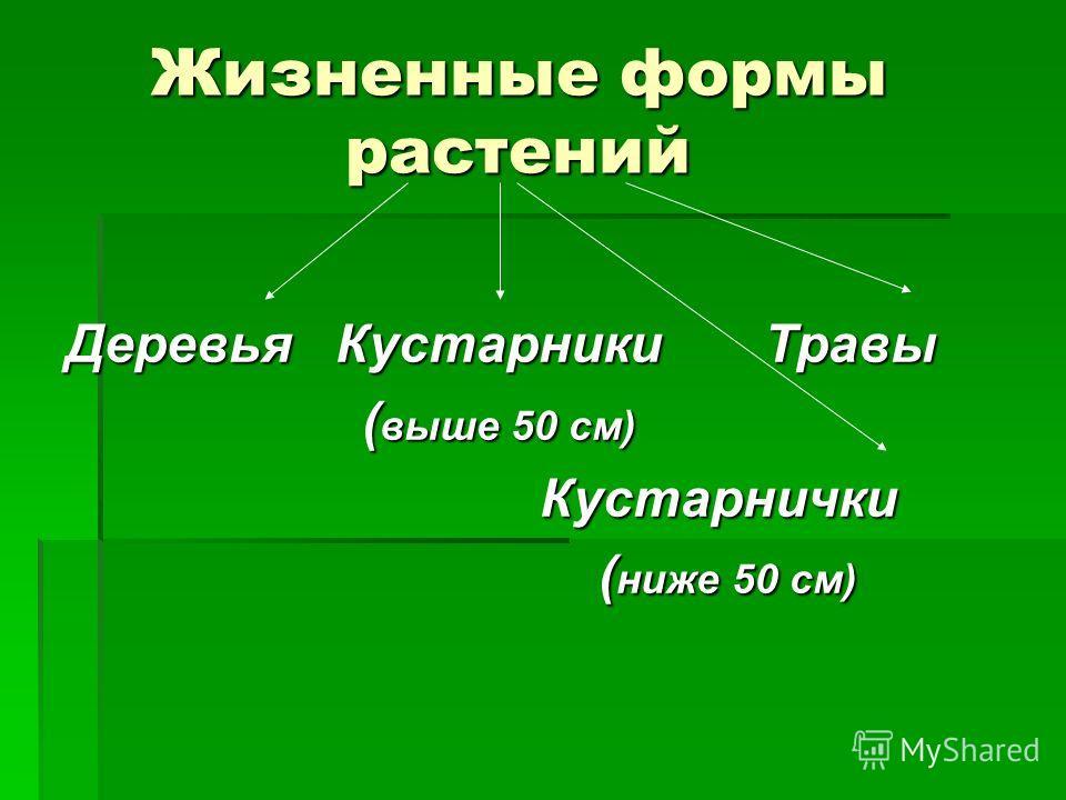 Жизненные формы растений Жизненные формы растений Деревья Кустарники Травы (выше 50 см) Кустарнички (ниже 50 см)