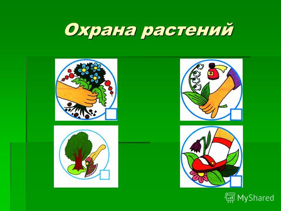 Охрана растений Охрана растений