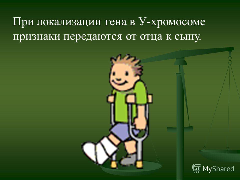 При локализации гена в У-хромосоме признаки передаются от отца к сыну.