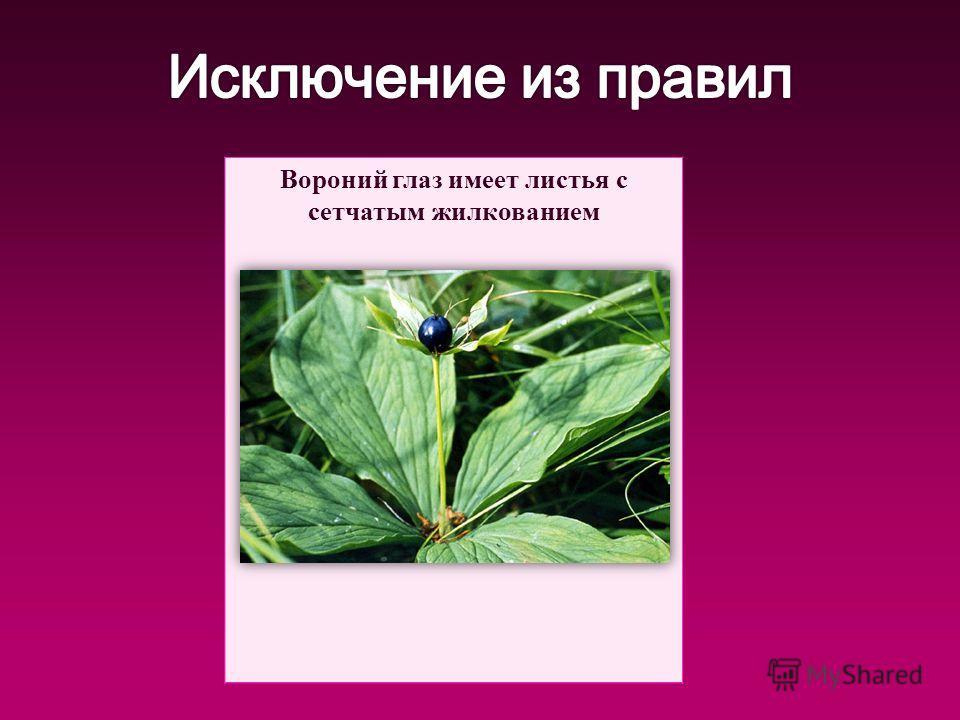 Вороний глаз имеет листья с сетчатым жилкованием