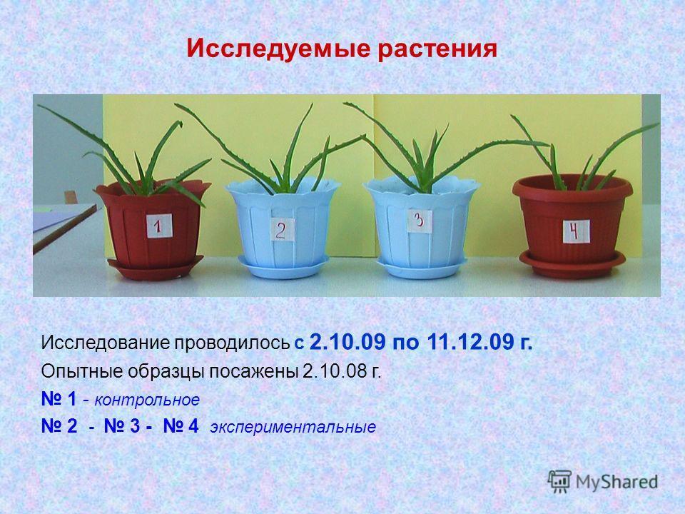 Исследуемые растения Исследование проводилось с 2.10.09 по 11.12.09 г. Опытные образцы посажены 2.10.08 г. 1 - контрольное 2 - 3 - 4 экспериментальные