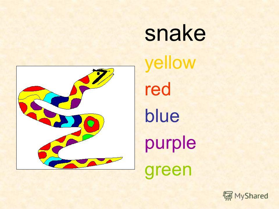 snake yellow red blue purple green