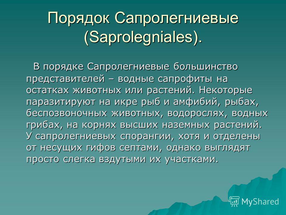Порядок Сапролегниевые (Saprolegniales). В порядке Сапролегниевые большинство представителей – водные сапрофиты на остатках животных или растений. Некоторые паразитируют на икре рыб и амфибий, рыбах, беспозвоночных животных, водорослях, водных грибах