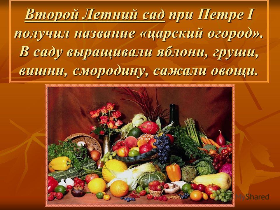Второй Летний сад при Петре I получил название «царский огород». В саду выращивали яблони, груши, вишни, смородину, сажали овощи.