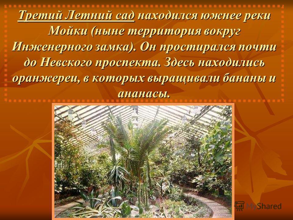 Третий Летний сад находился южнее реки Мойки (ныне территория вокруг Инженерного замка). Он простирался почти до Невского проспекта. Здесь находились оранжереи, в которых выращивали бананы и ананасы.