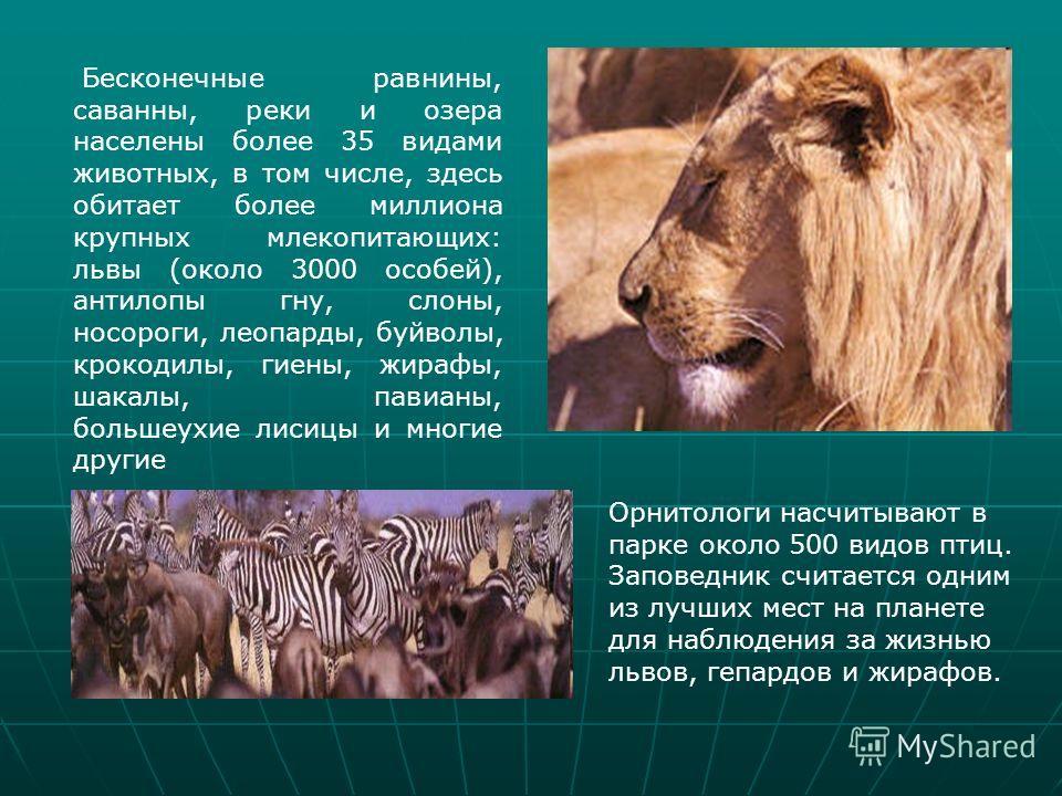 Бесконечные равнины, саванны, реки и озера населены более 35 видами животных, в том числе, здесь обитает более миллиона крупных млекопитающих: львы (около 3000 особей), антилопы гну, слоны, носороги, леопарды, буйволы, крокодилы, гиены, жирафы, шакал
