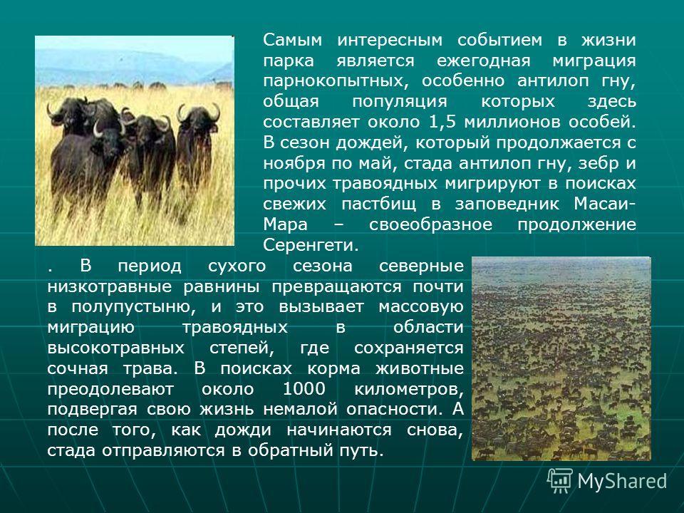 Самым интересным событием в жизни парка является ежегодная миграция парнокопытных, особенно антилоп гну, общая популяция которых здесь составляет около 1,5 миллионов особей. В сезон дождей, который продолжается с ноября по май, стада антилоп гну, зеб