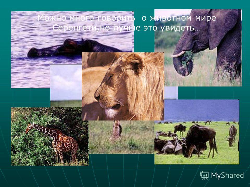 Можно много говорить о животном мире Серенгети,но лучше это увидеть…