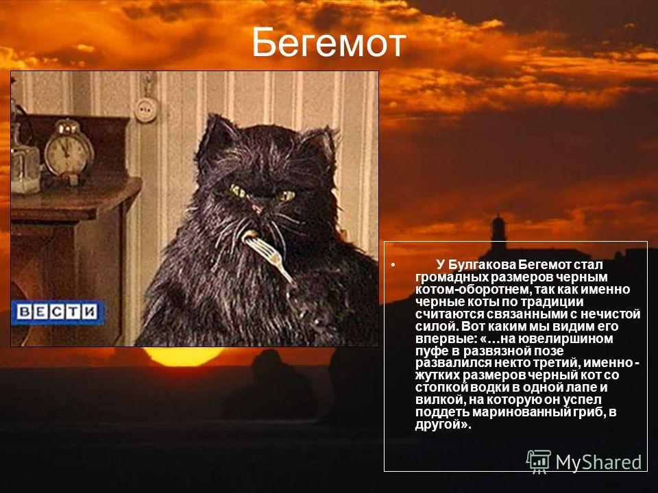 Бегемот У Булгакова Бегемот стал громадных размеров черным котом-оборотнем, так как именно черные коты по традиции считаются связанными с нечистой силой. Вот каким мы видим его впервые: «…на ювелиршином пуфе в развязной позе развалился некто третий,