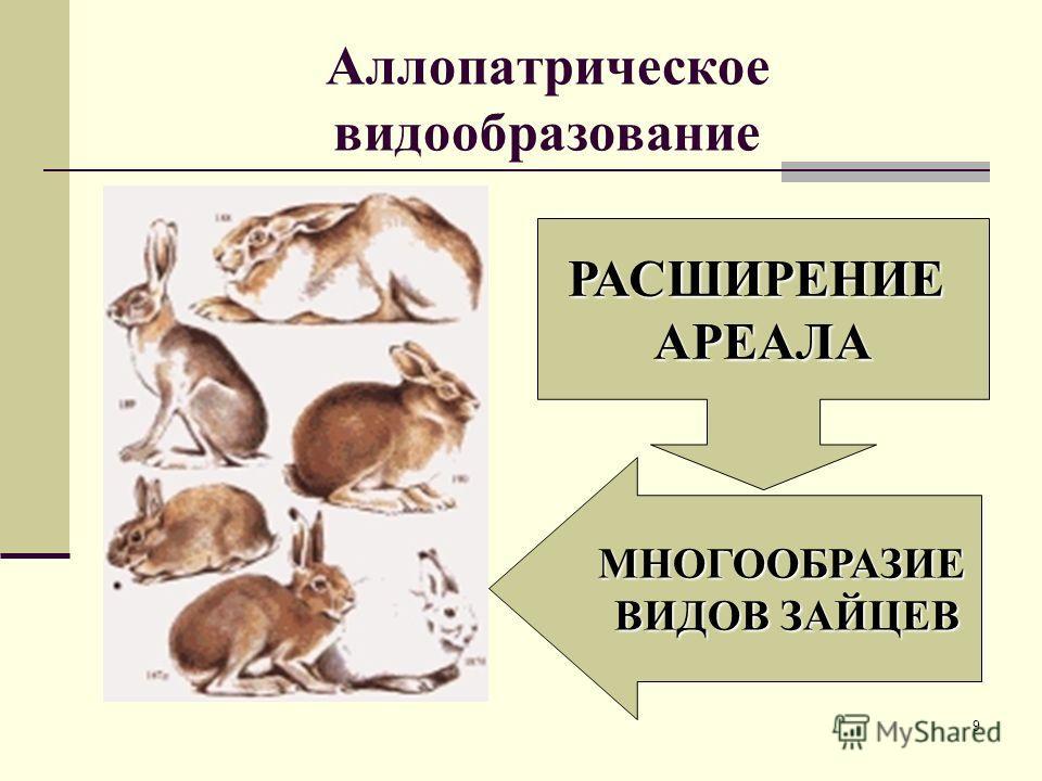 8 Галапагосские вьюрки